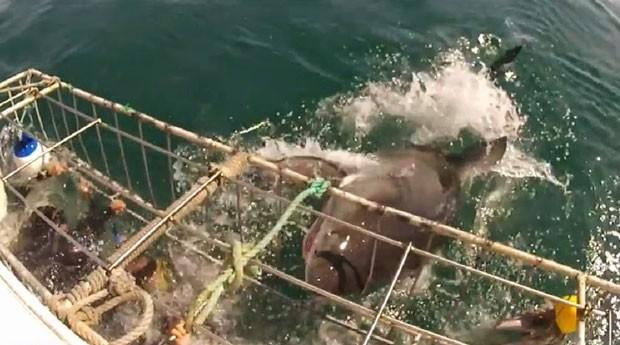 Mesmo protegidos por gaiola, turistas passaram por momento de pânico (Foto: Reprodução/YouTube/Patrick Andersson)