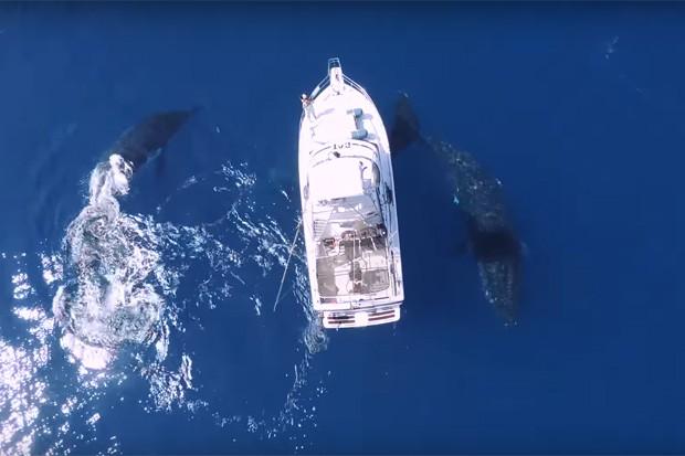 Baleias circulam iate em mar do oceano pacífico (Foto: Reprodução/Youtube)