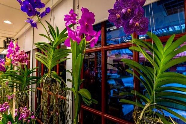 orquídeas-casa-bbb (Foto: Divulgação/TV Globo)