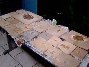 Material arqueológico apreendido será analisado por perícia  (Foto: Vanderlei Duarte/ EPTV)