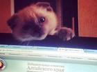 'Pesquisa' mostra gato como favorito em eleição para prefeito na Rússia