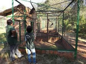 Viveiro adequado recebe macacos em reabilitação  (Foto: Alan Schneider / G1)