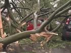 'Milagre', diz morador de Chapecó que teve carro atingido por árvore
