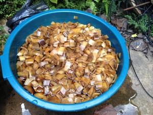 Após cortado tronco da bananeira será cozido.  (Foto: Ana Kézia Gomes/ G1)