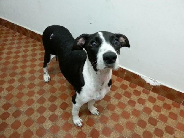 Cachorros passaram por exames e foram medicados antes de ser entregues à adoção (Foto: Divulgação/Pata)