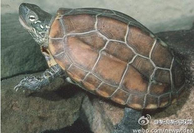 Menino de oito anos foi flagrado com tartaruga de estimação escondida na cueca (Foto: Reprodução/Weibo)