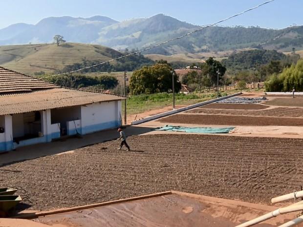 Chuvas em maio e junho prejudicou produção de cafés especiais no Sul de Minas (Foto: Reprodução EPTV)