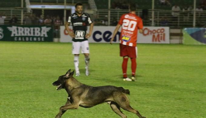 """Cachorro invasor """"dá ajudinha"""" e Caldense vence o Villa Nova no fim (Foto: Luciano Santos / Mantiqueira)"""