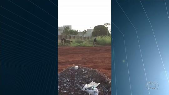 Policiais matam cavalos às margens da BR-060, em Rio Verde; vídeo
