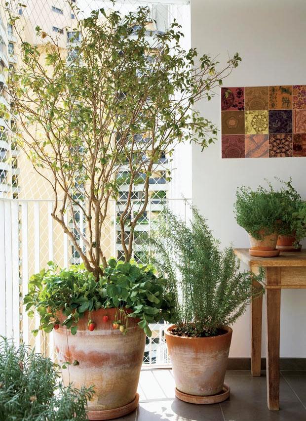 Well-known Como plantar morangos no seu apartamento - Casa e Jardim | Frutífera HL28