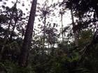 Para dias de calor, Guarapuava oferta opções de lazer gratuitas e ao ar livre