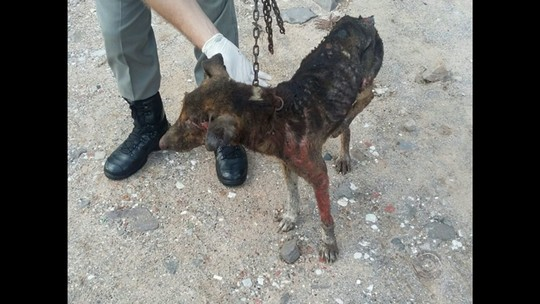 Cachorro morre após ser queimado vivo em Santa Maria