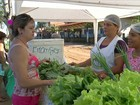 Cultivo orgânico e diversificação ajudam a melhorar a renda no PA