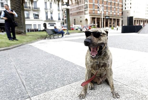 Um cão foi flagrado na terça-feira (18) de óculos na Praça Independência em Montevidéu, no Uruguai. (Foto: Andres Stapff/Reuters)