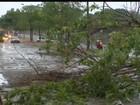 Chuva forte derruba árvores, casa e causa princípio de incêndio na capital