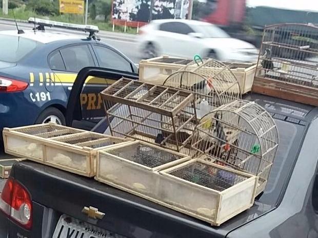 Dois homens vão responder por transporte ilegal de animal silvestre (Foto: Reprodução/RBS TV)