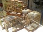 BPA apreende 19 pássaros silvestres em uma casa na Cidade Universitária