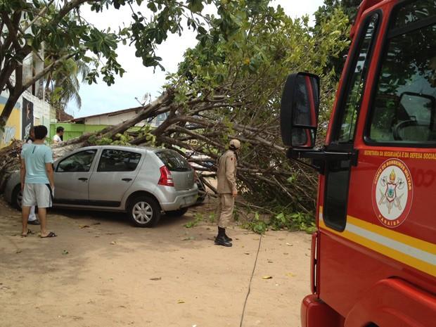 """Uma árvore tombou em cima de dois carros que estavam estacionados próximos da Avenida Aegemiro de Figueiredo, no bairro do Bessa, na manhã desta sexta-feira (18). De acordo com Tarcísio Carlos, proprietário de um dos carros atingidos, não havia ninguém dentro do carro quando a árvore caiu. """"Ninguém ficou ferido, foram só danos materiais"""" completou. O Corpo de Bombeiros foi chamado até o local para remover a árvore (Foto: Walter Paparazzo/G1)"""
