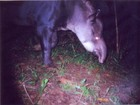 Estudo verifica impacto da caça em espécies da Mata Atlântica no Paraná