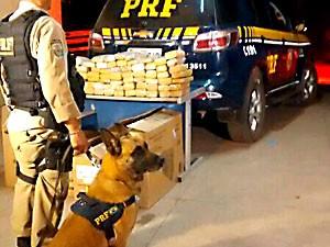 Droga apreendida pela PRF, policial e cão da corporação (Foto: Polícia Rodoviária Federal/Divulgação)