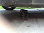 Jacaré é flagrado 'curtindo sombra' sob carro de família em casa nos EUA