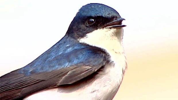 Resultado de imagem para Como um pássaro que foge, uma andorinha que voa