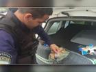 Polícia apreende 6 mil relógios contrabandeados do Paraguai