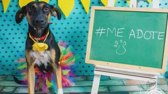 'Book' de cães abandonados incentiva a adoção em Araraquara