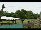 Produtores rurais de Uberaba têm prejuízos com quedas de energia