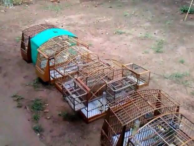 Vinte e seis aves foram apreendidas em Tibiriça (Fot Divulgação / Polícia Ambiental)