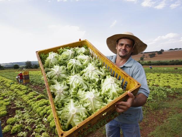 Tecnologia ajuda a melhorar a qualidade das hortaliças (Foto: Divulgação/Hortitec)