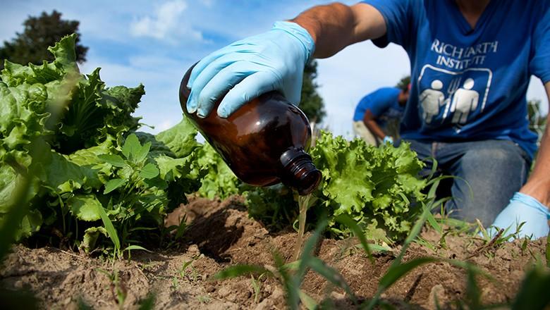 Pesquisa de campo com alfaces e urina humana (Foto: Marcin Szczepanski)