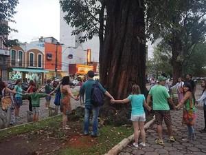 Abraços coletivos às árvores estão sendo feitos todos os dias (Foto: Alessandro Rifan)
