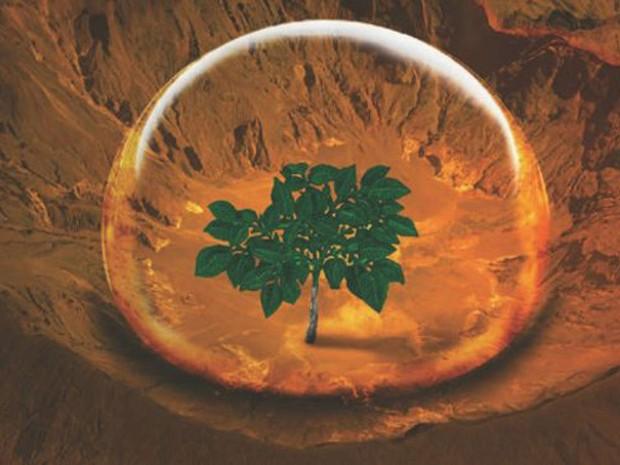 Para pesquisadores, batatas poderiam alimentar uma futura colônia humana em Marte  (Foto: CIP/BBC)
