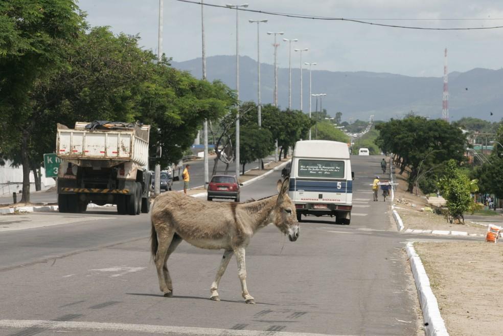 Abandono de animais pode resultar em acidentes nas estradas (Foto: Silvana Tarelho/Arquivo pessoal)