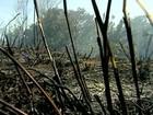 Incêndio continua destruindo o Parque Estadual de Itaúnas, no ES