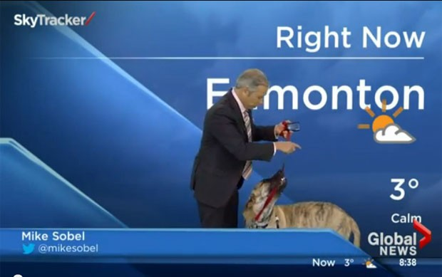 Ripple roubou a cena durante a previsão de tempo da emissora canadense de TV Global News (Foto: Reprodução/YouTube/Global News)