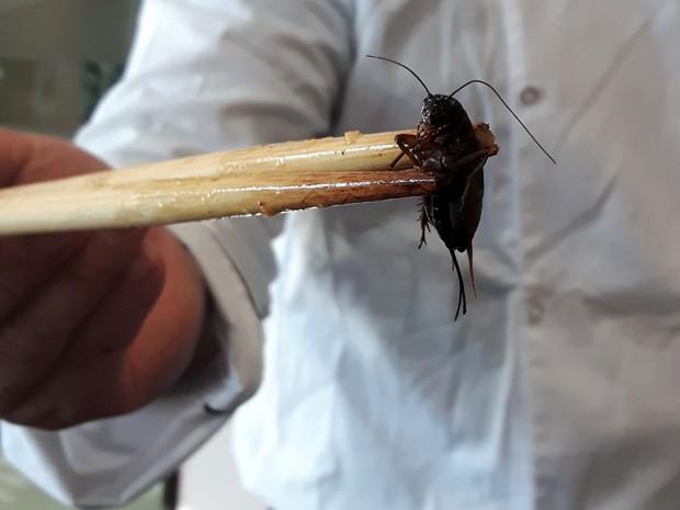 Gastronomia com insetos propõe a substituição de proteínas  (Foto: Júlia Groppo/G1)