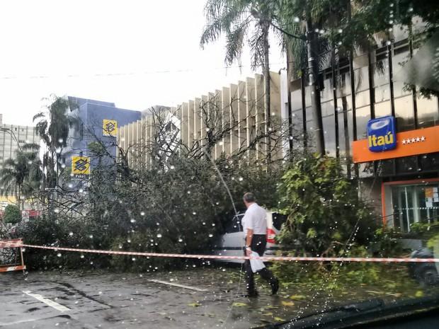 Árvore caiu na rua 15 de Novembro na tarde deste sábado (Foto: Anderson Morais/Vanguarda Repórter)