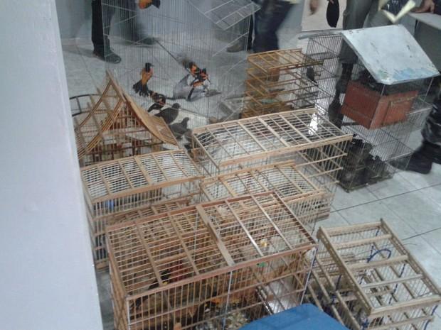Aves foram apreendidas durante operação (Foto: Sylvio Rabello/Polícia Civil)