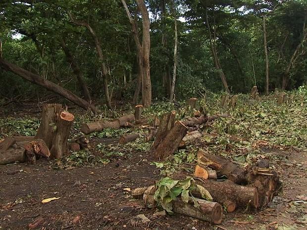 Ambientalista se diz contra derrubada de árvores do Cocó (Foto: TV Verdes Mares/Reprodução)