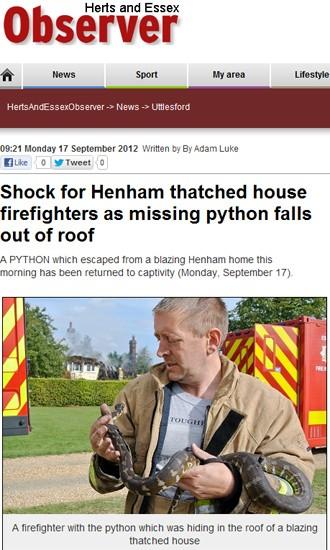 """Píton de 1,8 metros encontrada por bombeiros após incêndio (Foto: Reprodução/""""Herts and Essex Observer"""")"""
