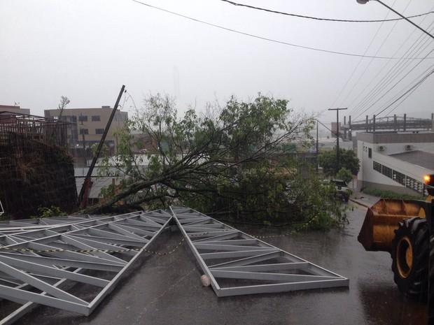 Em Pato Branco, o vento derrubou ao menos cinco árvores, uma delas em frente a uma metalúrgica no Bairro Novo Horizonte (Foto: Adriana Loduvichak / RPC)