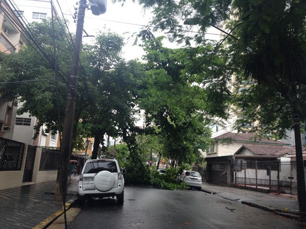 Árvore bloqueou rua Vergueiro Steidel, em Santos (Foto: Cristiane Amaral/TV Tribuna)