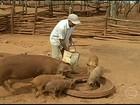 Criadores de MG reclamam da falta de milho no armazém da Conab