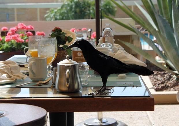 Ave se delicia com café da manhã no resort de luxo (Fot Dennis Barbosa/G1)
