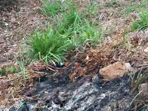 Local onde corpo foi encontrado estava com marcas de fogo (Foto: Jessé da Silva/Arquivo pessoal )
