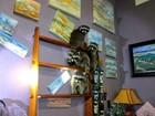 Polícia investiga invasão de galeria de arte e identifica suspeitos: 4 guaxinins