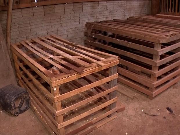 Aves eram mantidas presas em caixas, em local sem ventilação (Foto: Reprodução/TVCA)