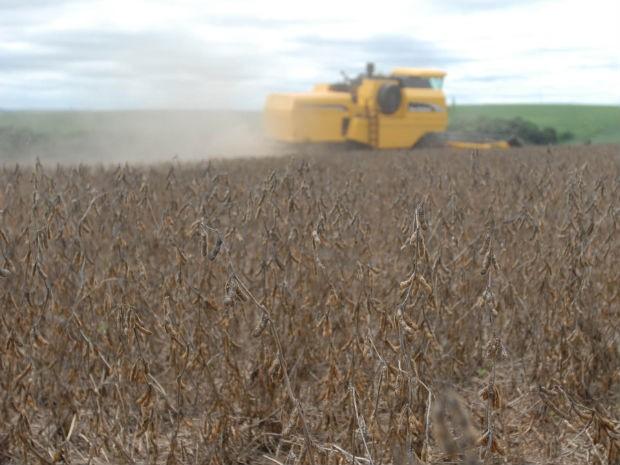 Mato Grosso deve assumir a liderança na produção de cereais, leguminosas e oleaginosos  (Foto: Divulgação/ AENotícias)